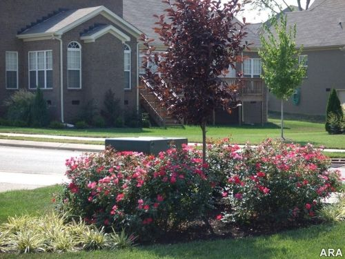 Landscaping Around Utility Boxes Gardening Front Yard