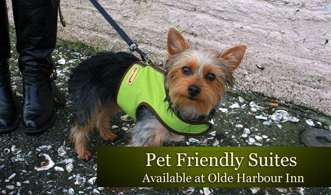 Pet Friendly Hotels In Savannah Georgia Pet Friendly Savannah Inns Pet Friendly Hotels Dog Friendly Hotels Pet Friendly