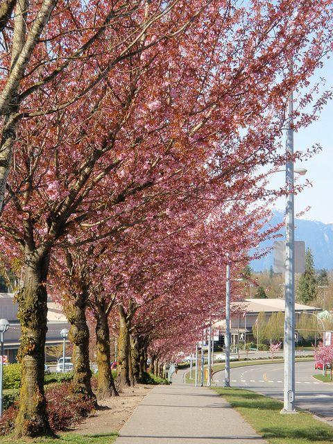 Walnut Grove Community Center Langley Bc Walnut Grove British Columbia Photo