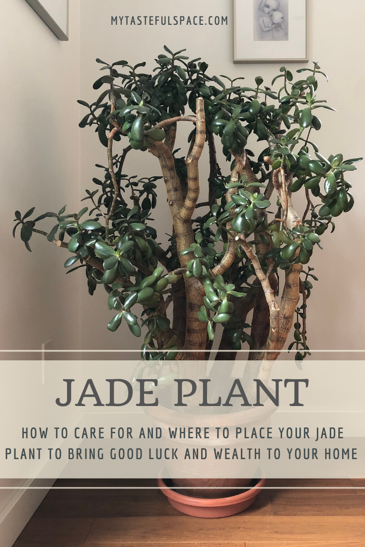 Jade Plant Care Meaning And Benefits