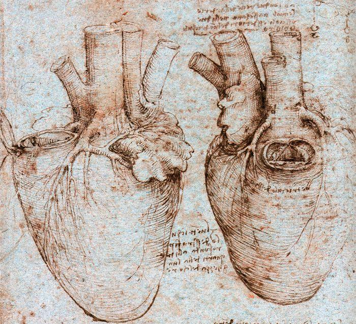 Leonardo Da Vinci - Anatomía del cuerpo humano (700×637) | Leonardo ...