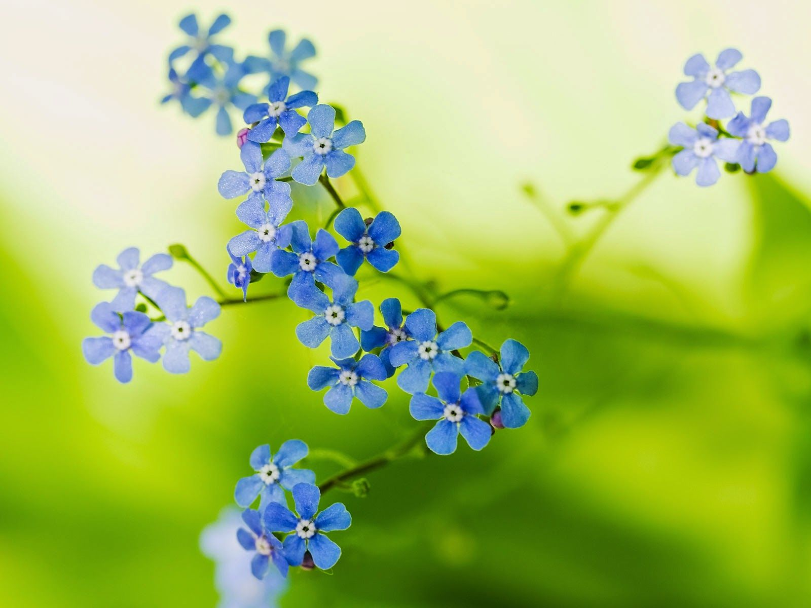 Picture of green beautiful flowers hd pictures hd pictures picture of green beautiful flowers hd pictures izmirmasajfo