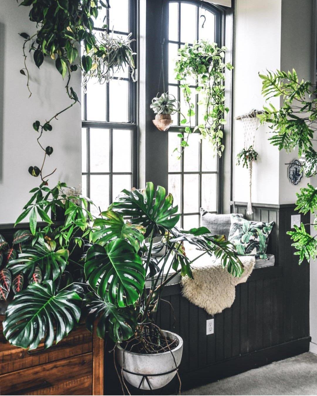 Urban Jungle Boho Home Decor Design Indoor Plants Plants