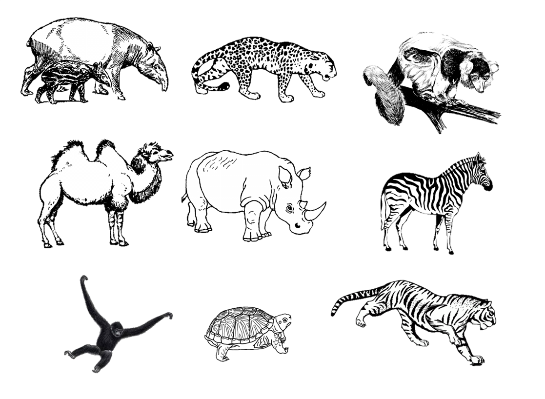 Line Drawings Of Zoo Animals : Animal drawing activity zoo how google search btec