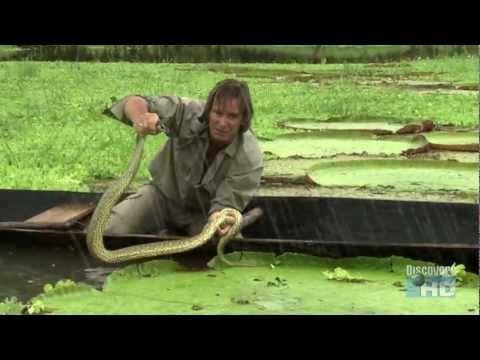 Austin Stevens - In Search of the Giant Anaconda (Full Documentary) HD - http://videos.linke.rs/austin-stevens-in-search-of-the-giant-anaconda-full-documentary-hd/