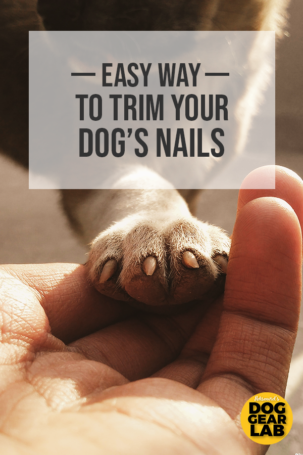 The Easy Way To Trim Your Dog S Nails Dog Training Obedience Your Dog Dog Nails
