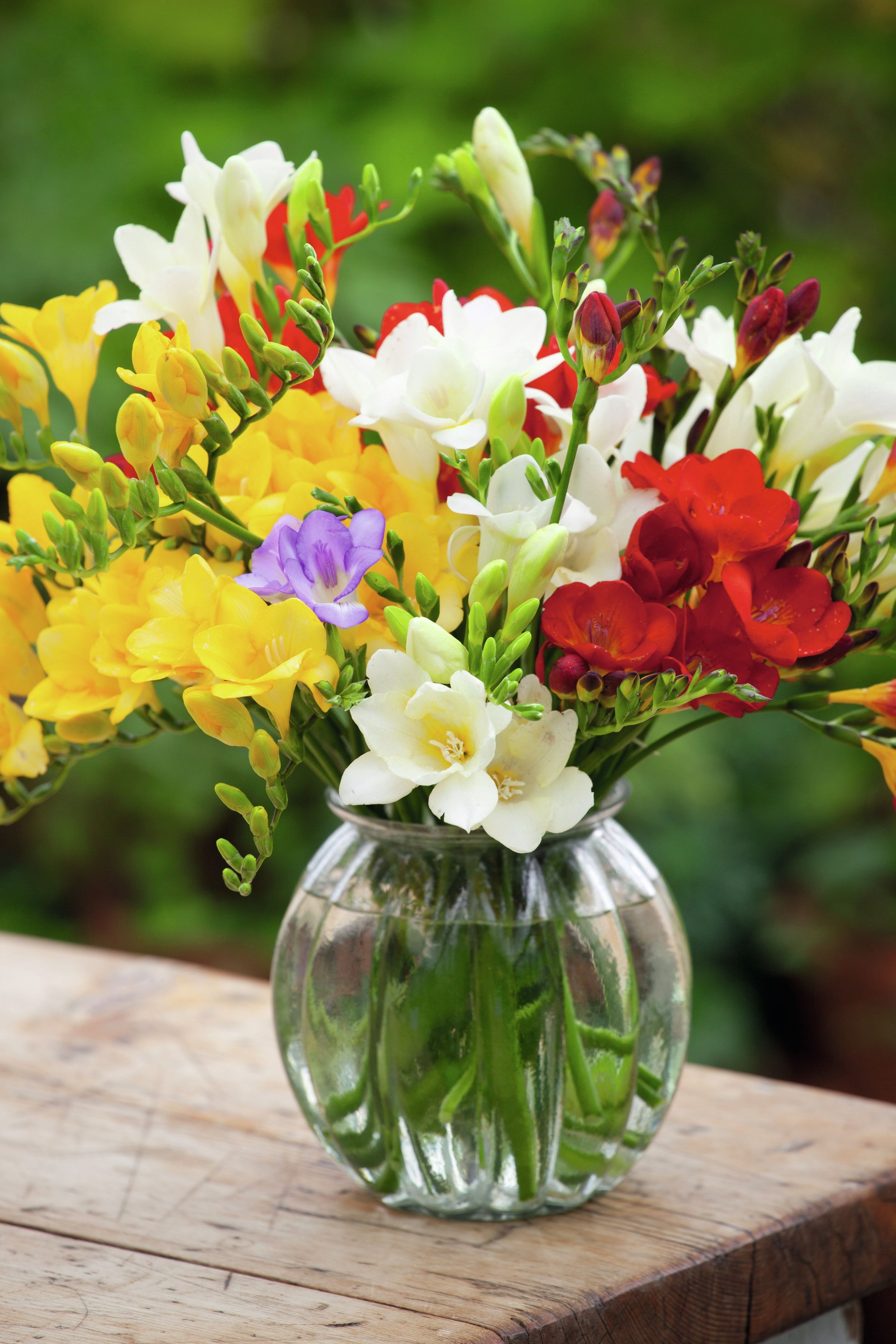 How To Plant And Grow Freesias Green Thumb Flowers Fresia Flower Freesia Flowers