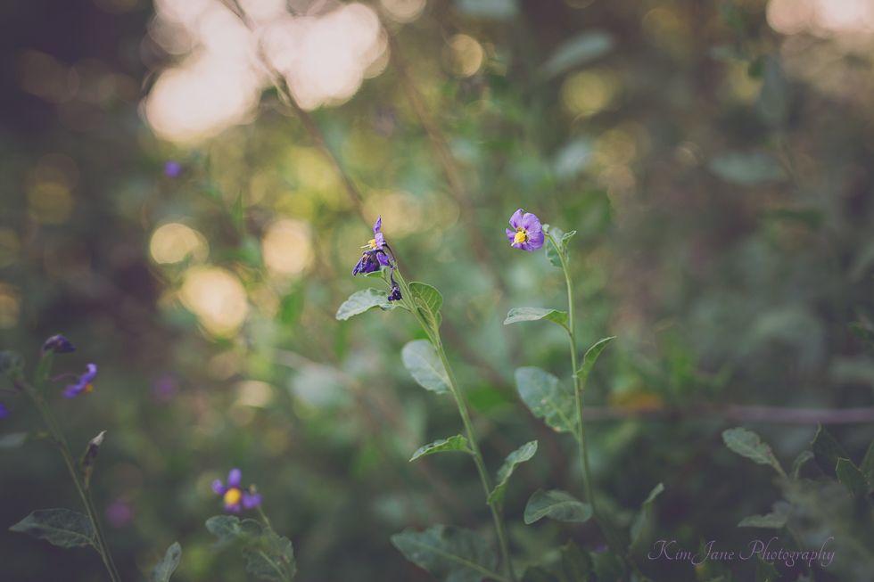 spring wildflowers photo
