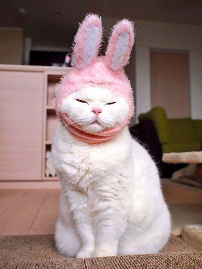 New Funny Pets 17-Year-Old Cat Suffering From Kidney Failure Is Japan's Cutest & Laziest Feline 17-Year-Old Cat Suffering From Kidney Failure Is Japan's Cutest & Laziest Feline 11