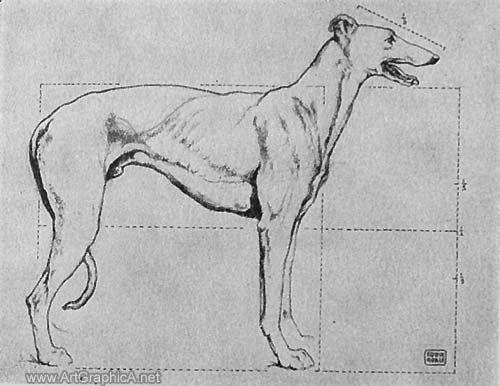 Skeleton Of A Greyhound Greyhound Anatomy Galgo Dibujos Animales