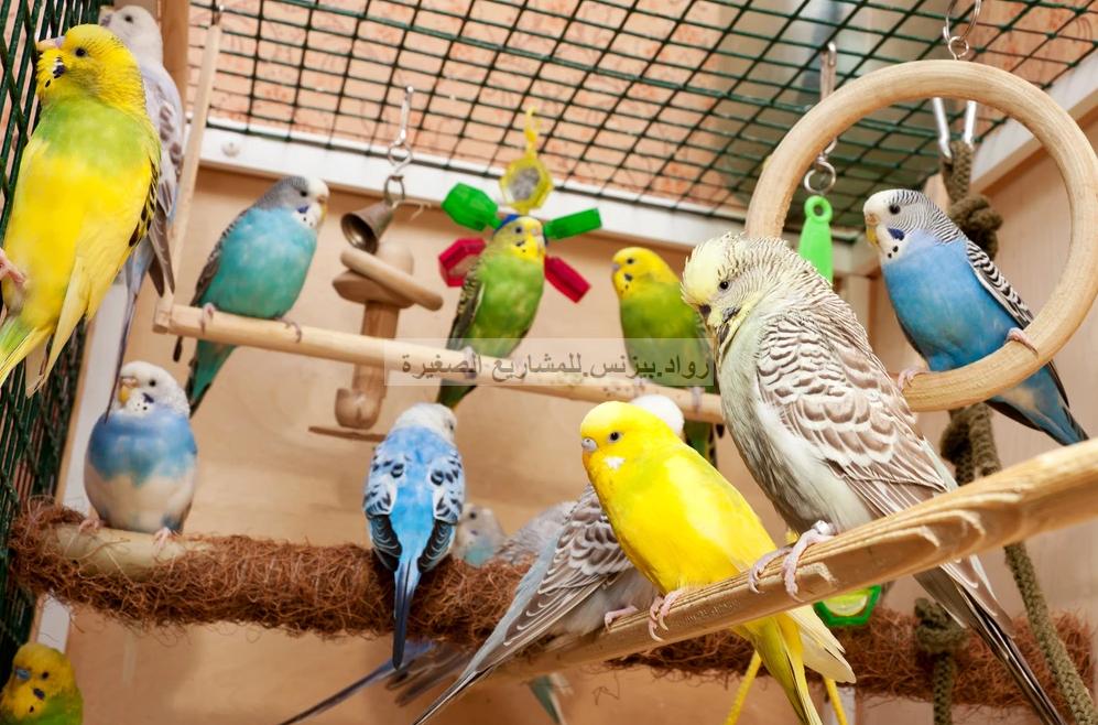 تربية طيور الزينة مشروع مربح معلومات تساعدك للبدء بتربية طيور الزينة Pet Birds Parrot Pets