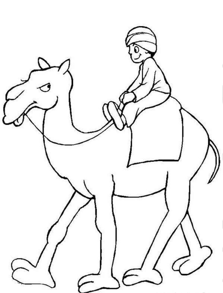 Camels Carries Arabic Man Coloring Page Photos, Animal at