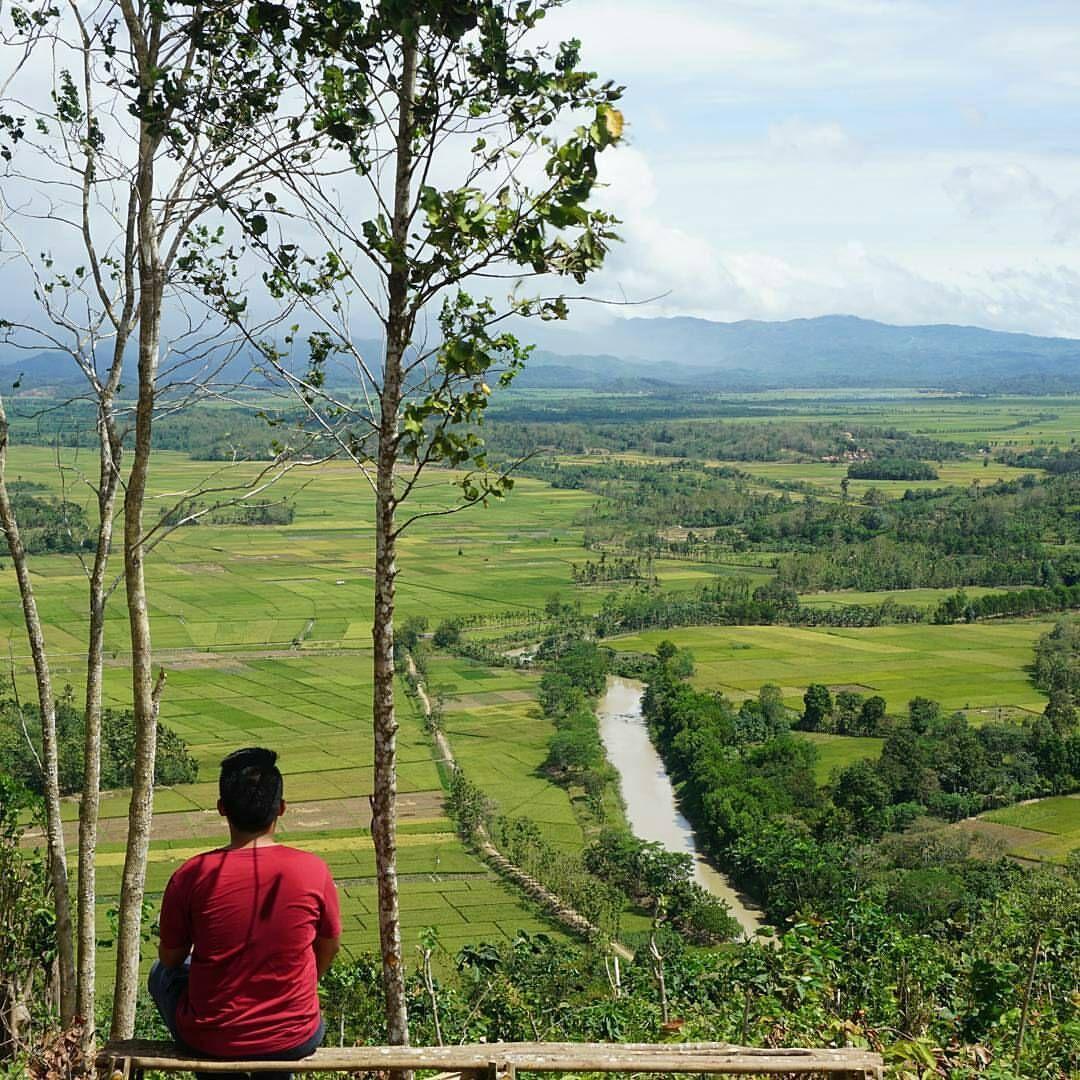 Bukit Blitarejo Lampung Pemandangan Persawahan Yang Memanjakan Mata Lampung Pemandangan Pedesaan Alam