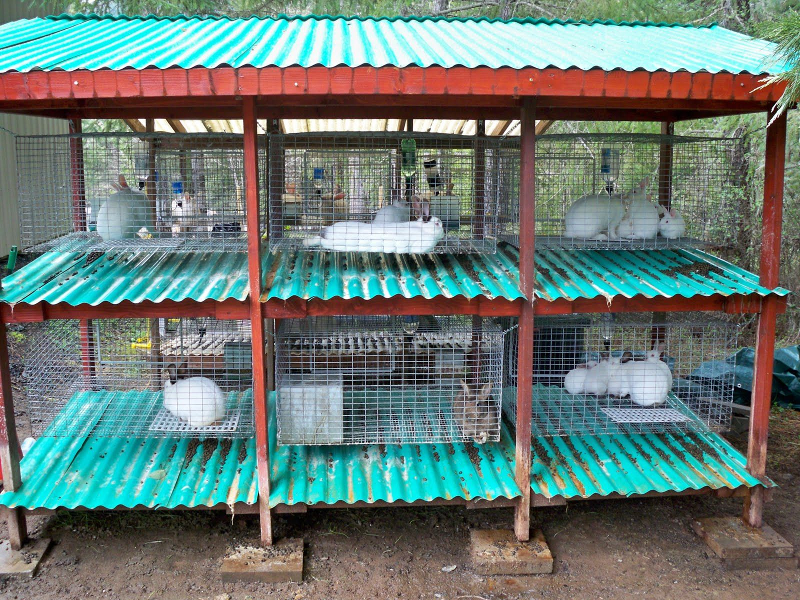 rabbit cage design | More on Rabbits | Rabbits | Pinterest | Rabbit ...