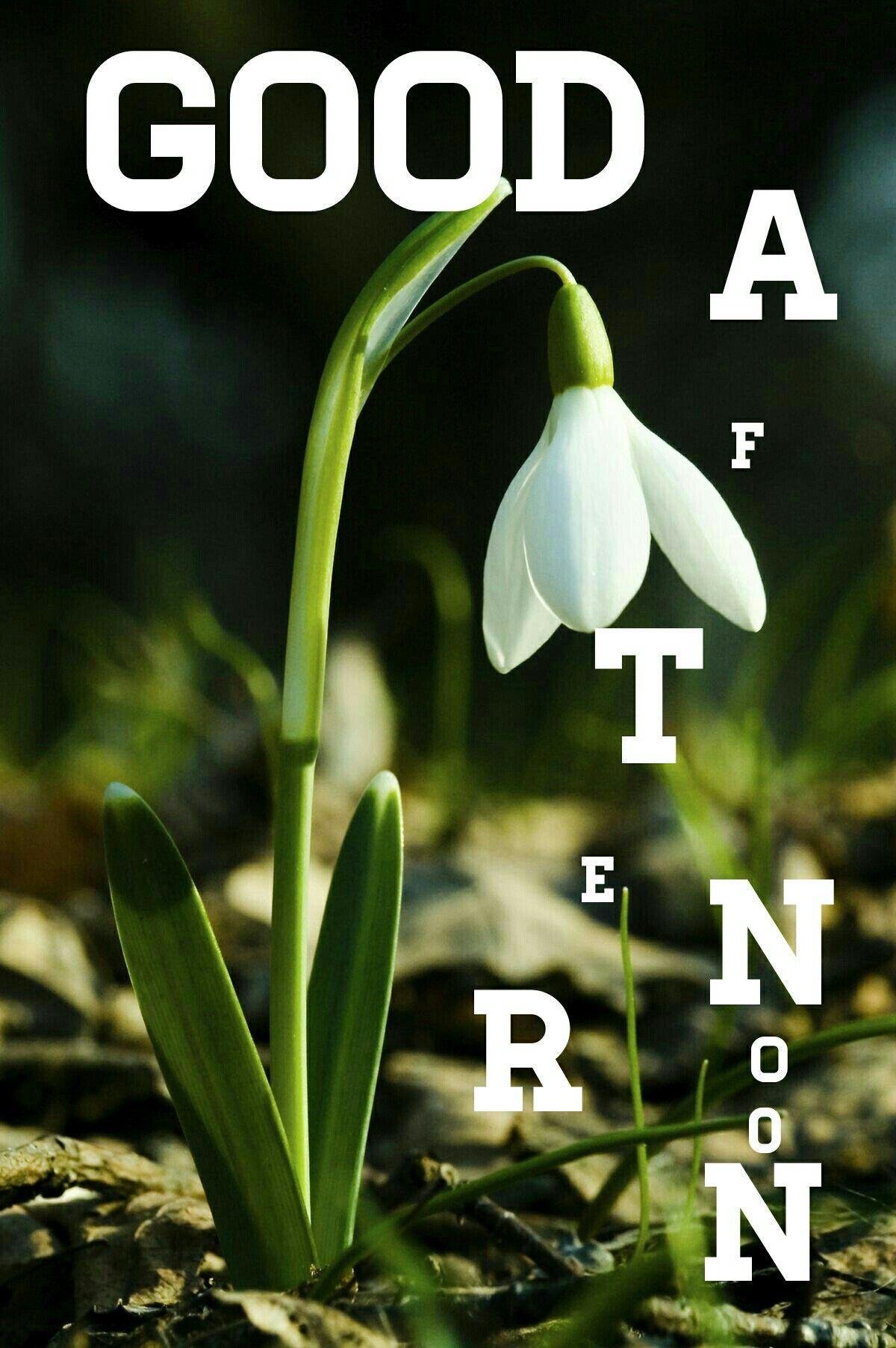 Pin By Anita Wandrag On Good Afternoon Good Evening Good Afternoon Quotes Good Afternoon Good Morning Greetings