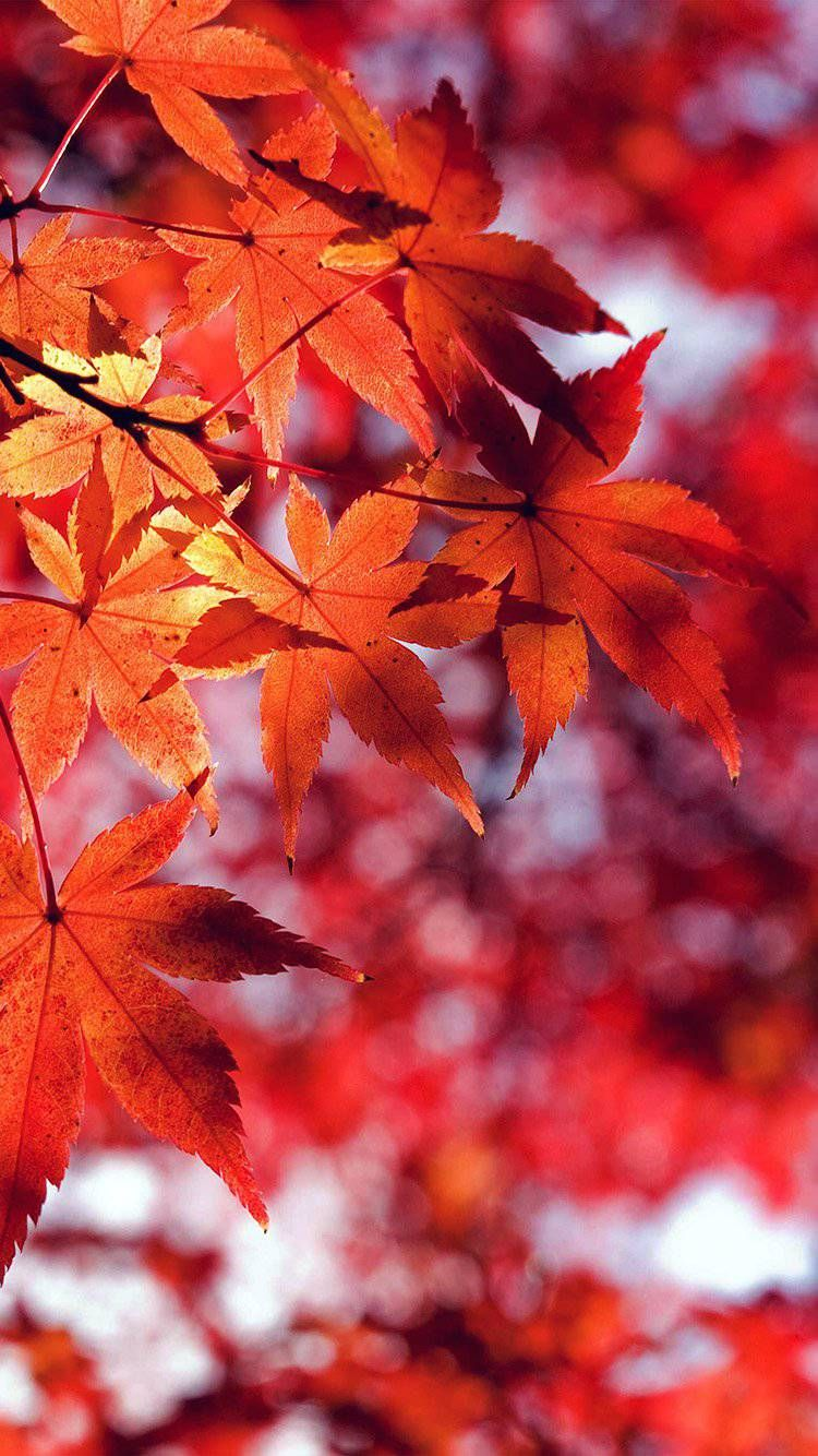 Fall wallpaper by Coralina on October Leaves wallpaper