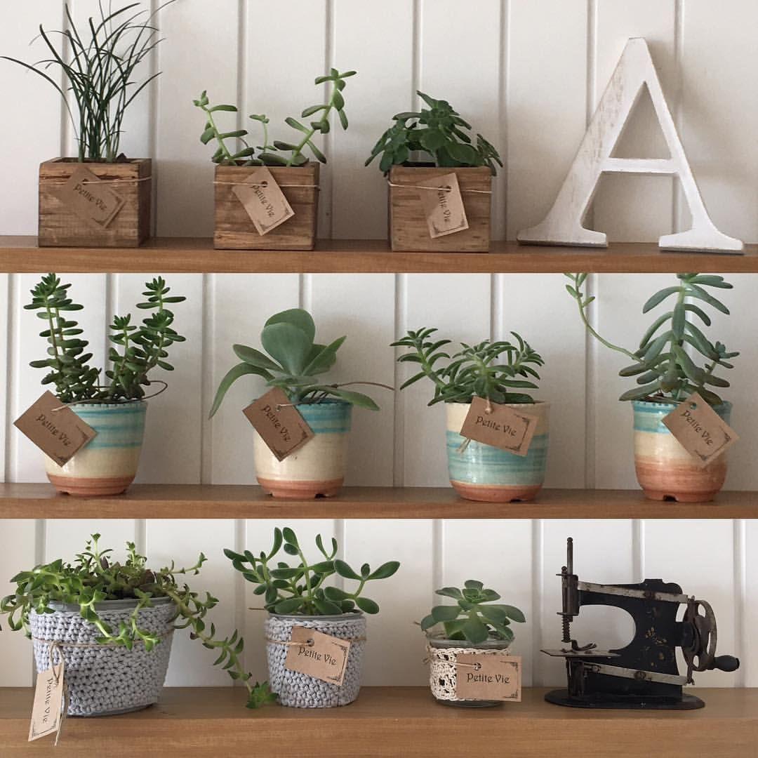 Nursery Indoor Plants Near Me: Consulta Esta Foto De Instagram De @petite_vie_plantas