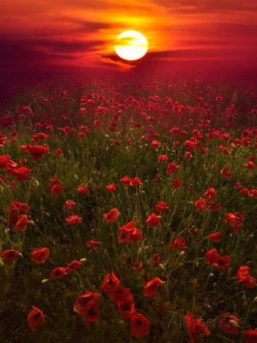 Warm Sunset Valokuvavedos tekijänä Marco Carmassi AllPosters.fi-sivustossa