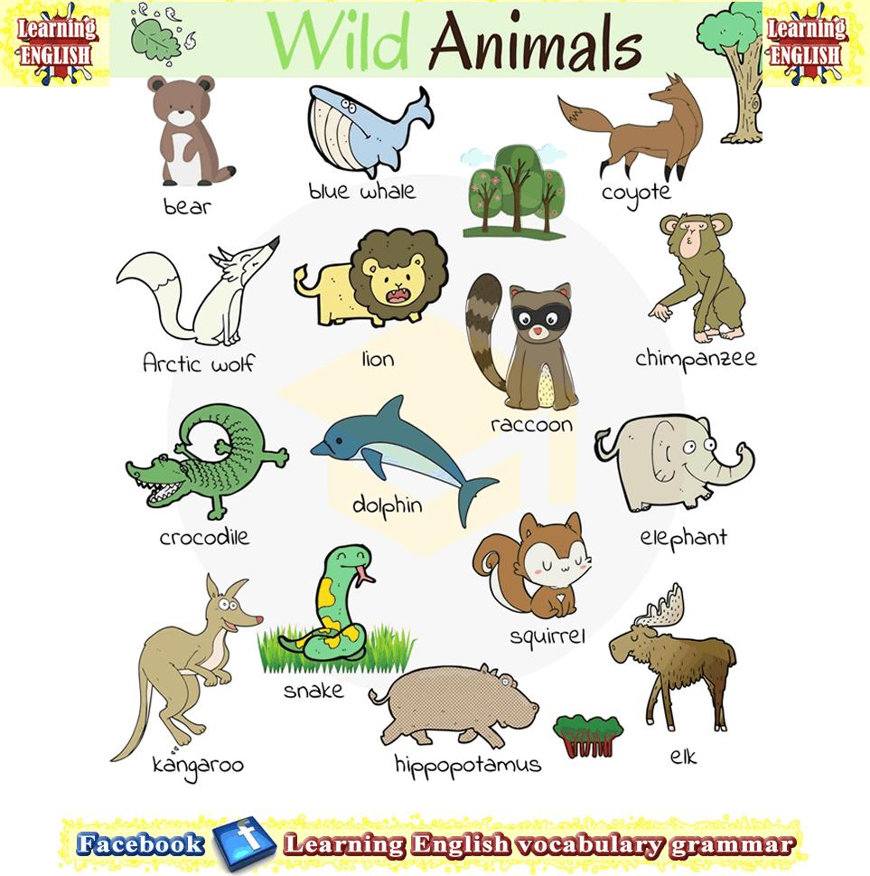 Wild Animals Pictures With English Names Educacion Preescolar