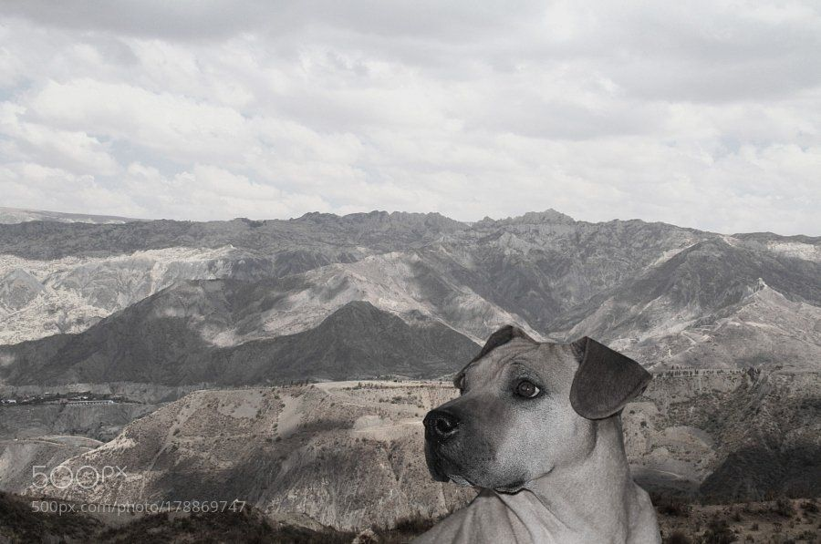 #photography Centinela  de la montaña by caroclo04 https://t.co/geyhehe9Vg #followme #photography
