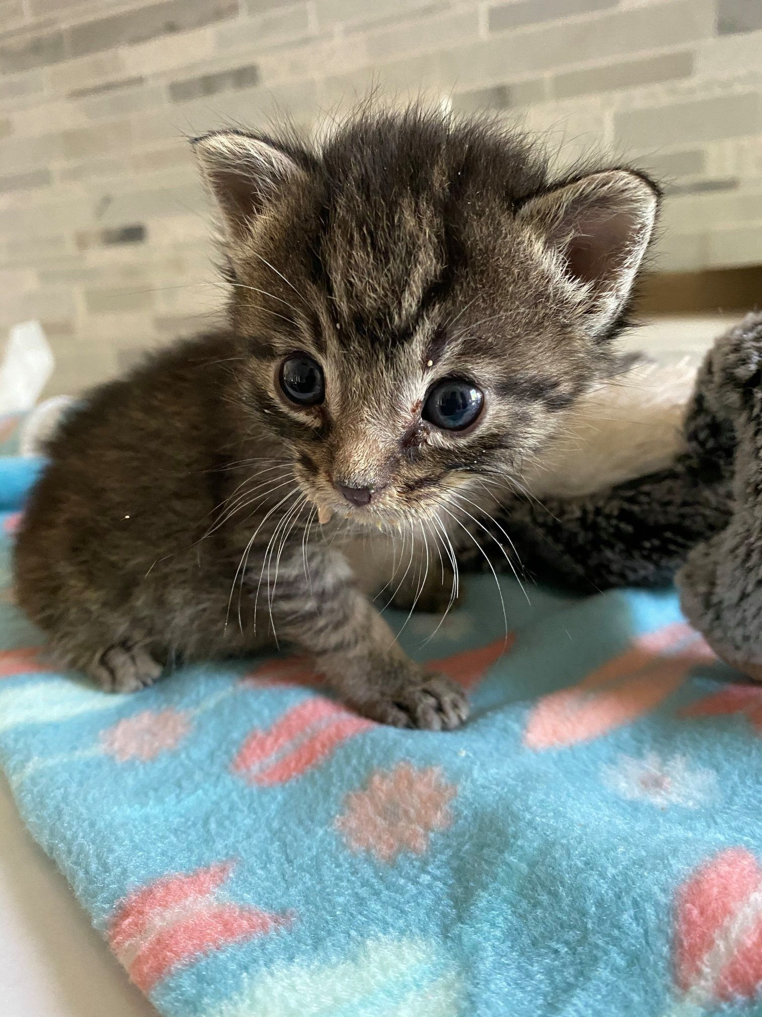 Supporting Needy Kittens In 2020 Kittens Newborn Kittens Kitten
