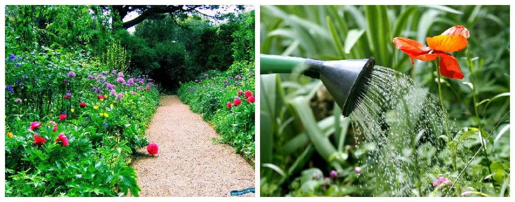 Collage remedios jardin min jardineria pinterest for Jardineria navarro