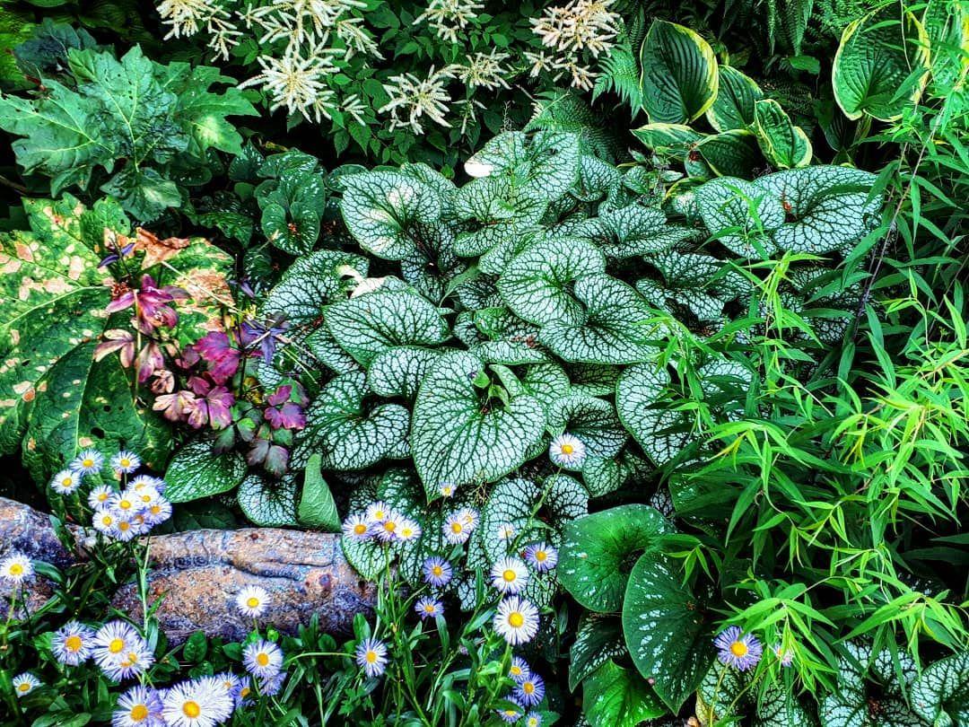 Regensburg Wiesent Nepalgarten Himalaya Garten Garden Ausflug Kleineauszeit Natur Pflanzen Plants Blumen Flowers Sommer Succulents Plants