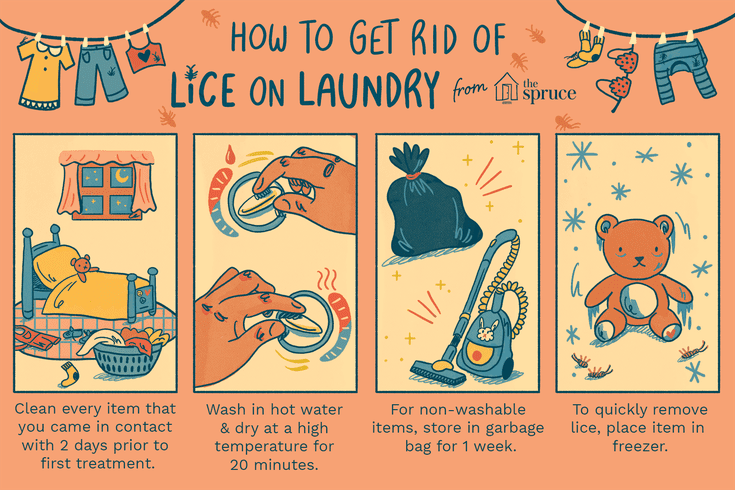 How To Wash Laundry Infested With Lice Head Louse Head Lice Remedy Louse