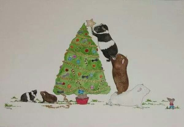 * ♡Guinea Pigs at Christmas