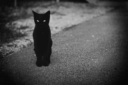 I love black cats
