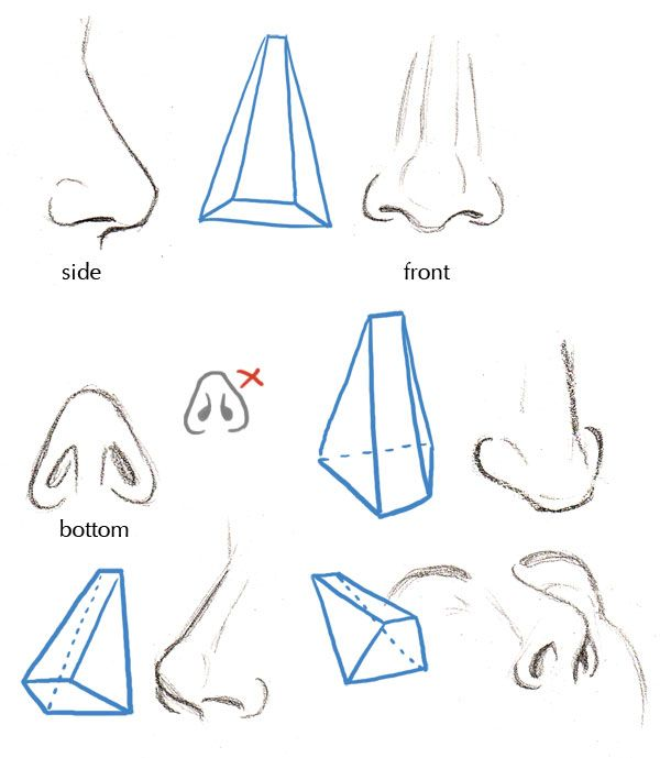how to draw a nose straight on