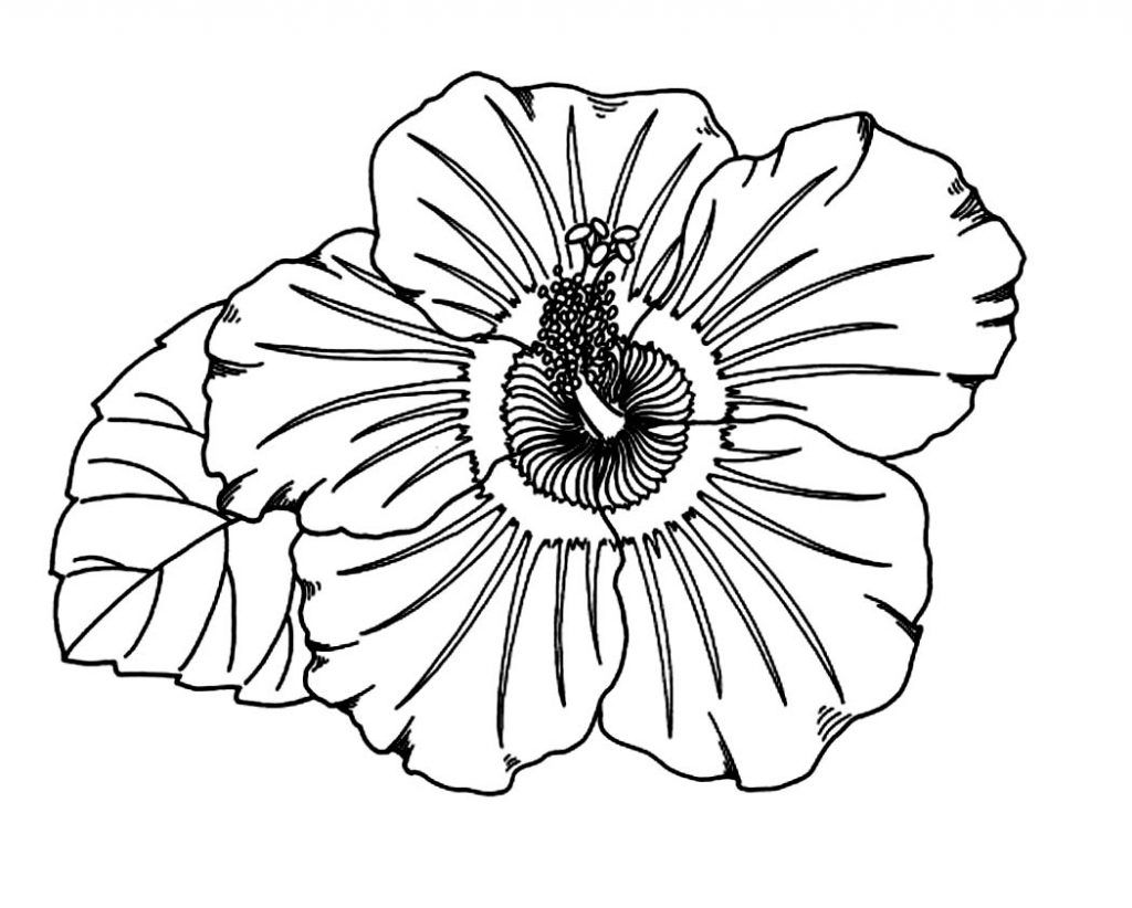 free printable hibiscus coloring pages for kids pinterest