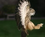 Stunning shot of the Eagle Owl