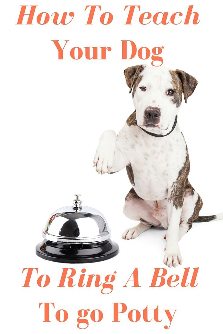 Train Your Dog To Ring A Bell To Go Potty Dog Potty Puppy