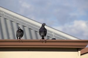 Have You Ever Heard Anything Rustling In The Gutters Find Out What Critters Are Lurking In Your Gutters Now Gutter Protection Cleaning Gutters Gutters