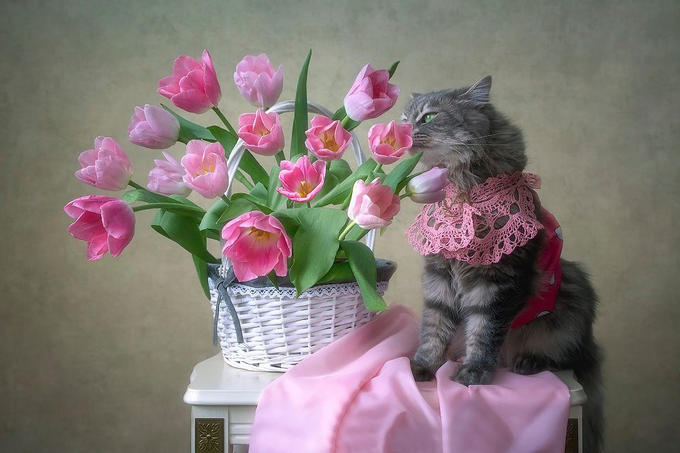 Gift For The Womans By Daykiney On Deviantart Cat Flowers Cats And Kittens Animal Photo