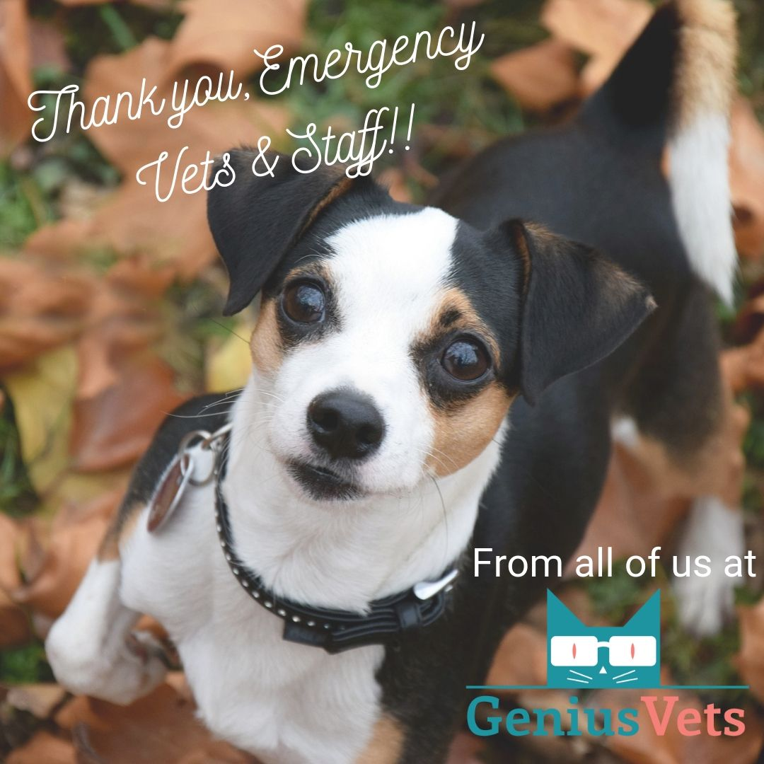 We are grateful to the emergency vets and staff who work