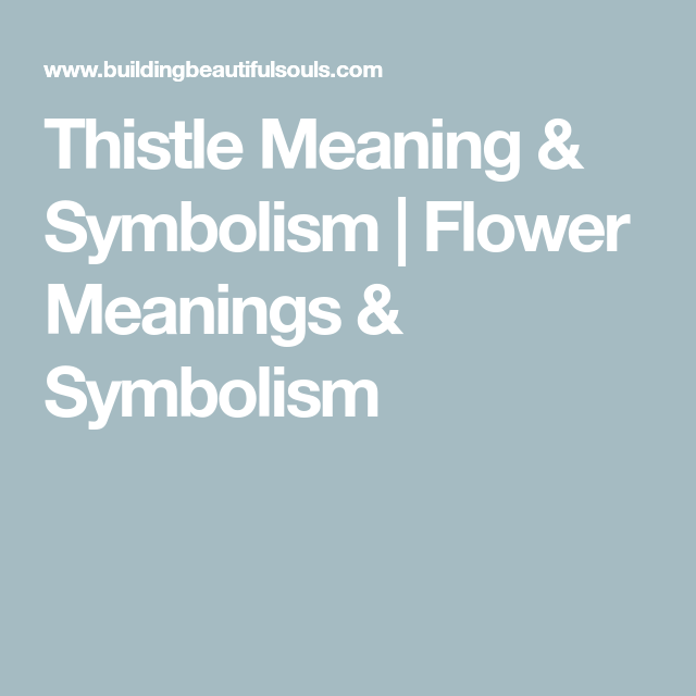 Thistle Meaning & Symbolism | Flower Meanings & Symbolism ...