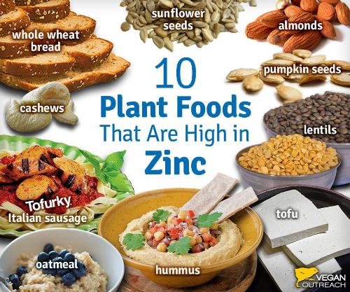 plant based diet GERMAN