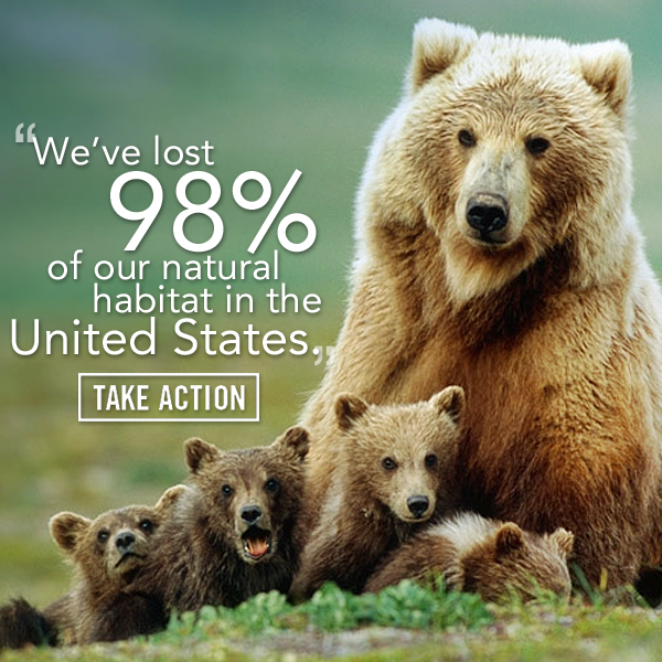 Preserve the Lives of AtRisk Grizzly Bears Animal