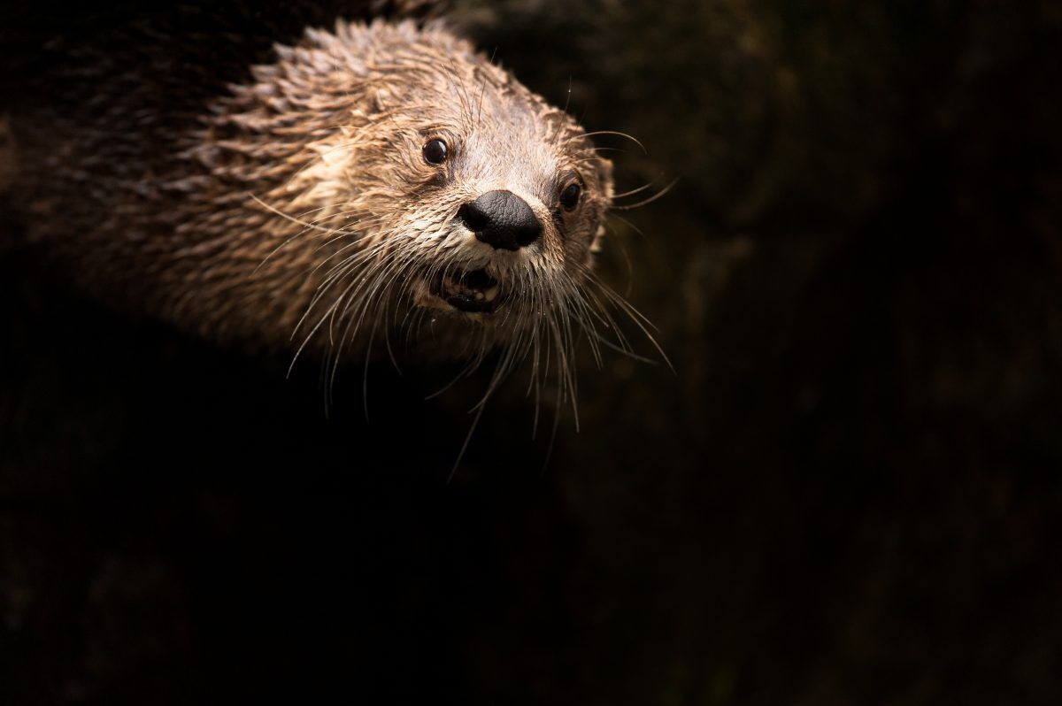 Scottish Wildlife Photography: Wildcats, Eagles and Otters | VisitScotland