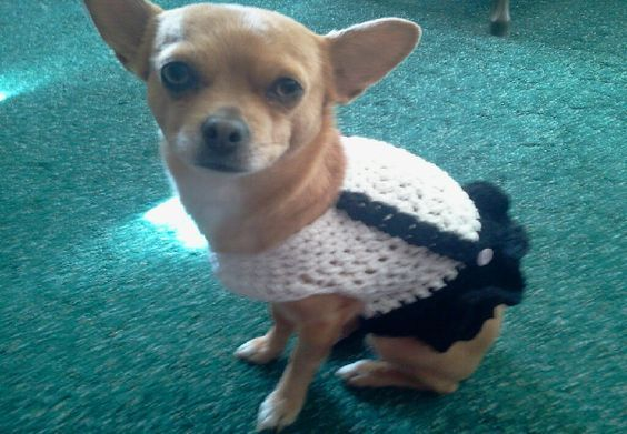 Crochet Dog Sweater Patterns You Your Pup Will Love Dog Dresses