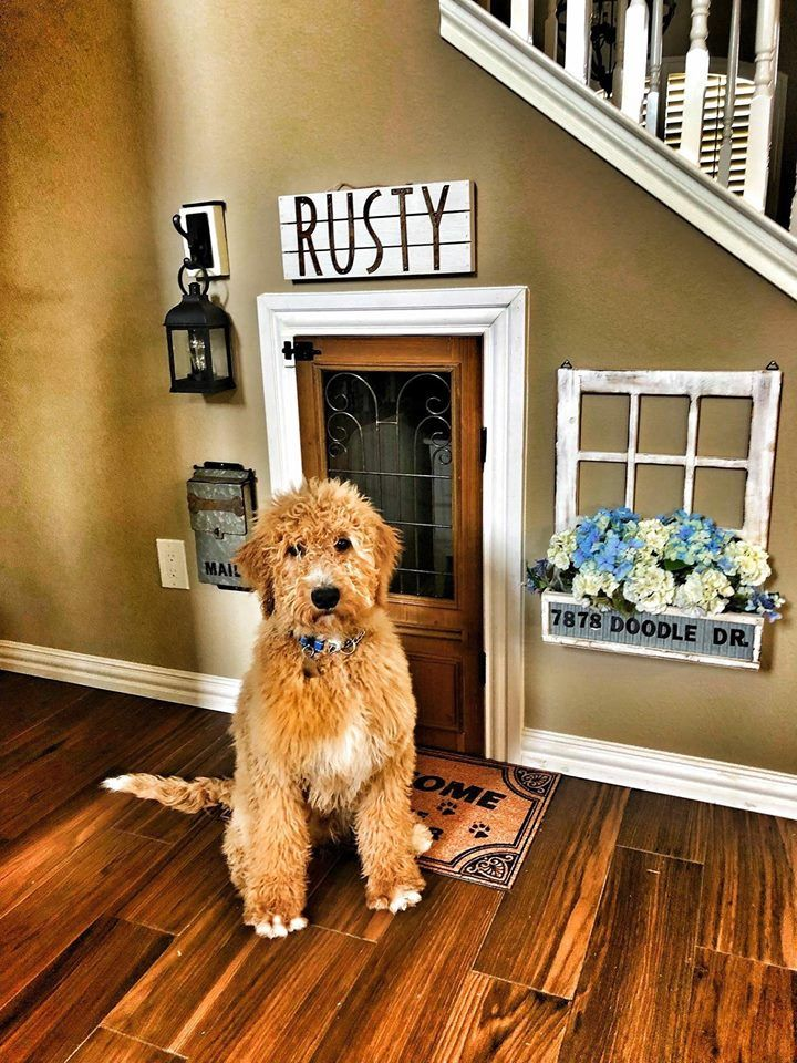 Cute dog house dog rooms dog crate furniture under
