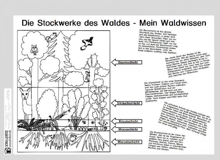 lebensraum wald stockwerke archive  blog  bildung leben