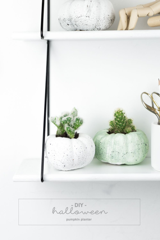 halloween deko basteln k rbis sukkulenten wunderbare herbstdekoration pinterest. Black Bedroom Furniture Sets. Home Design Ideas