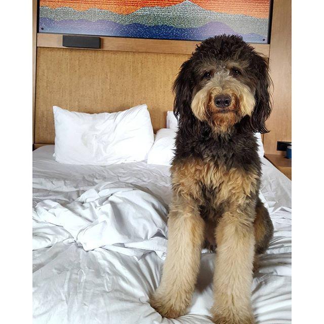 Bring Along Your Furry Friend To Our Pet Friendly Hotel Aloft Asheville Nc