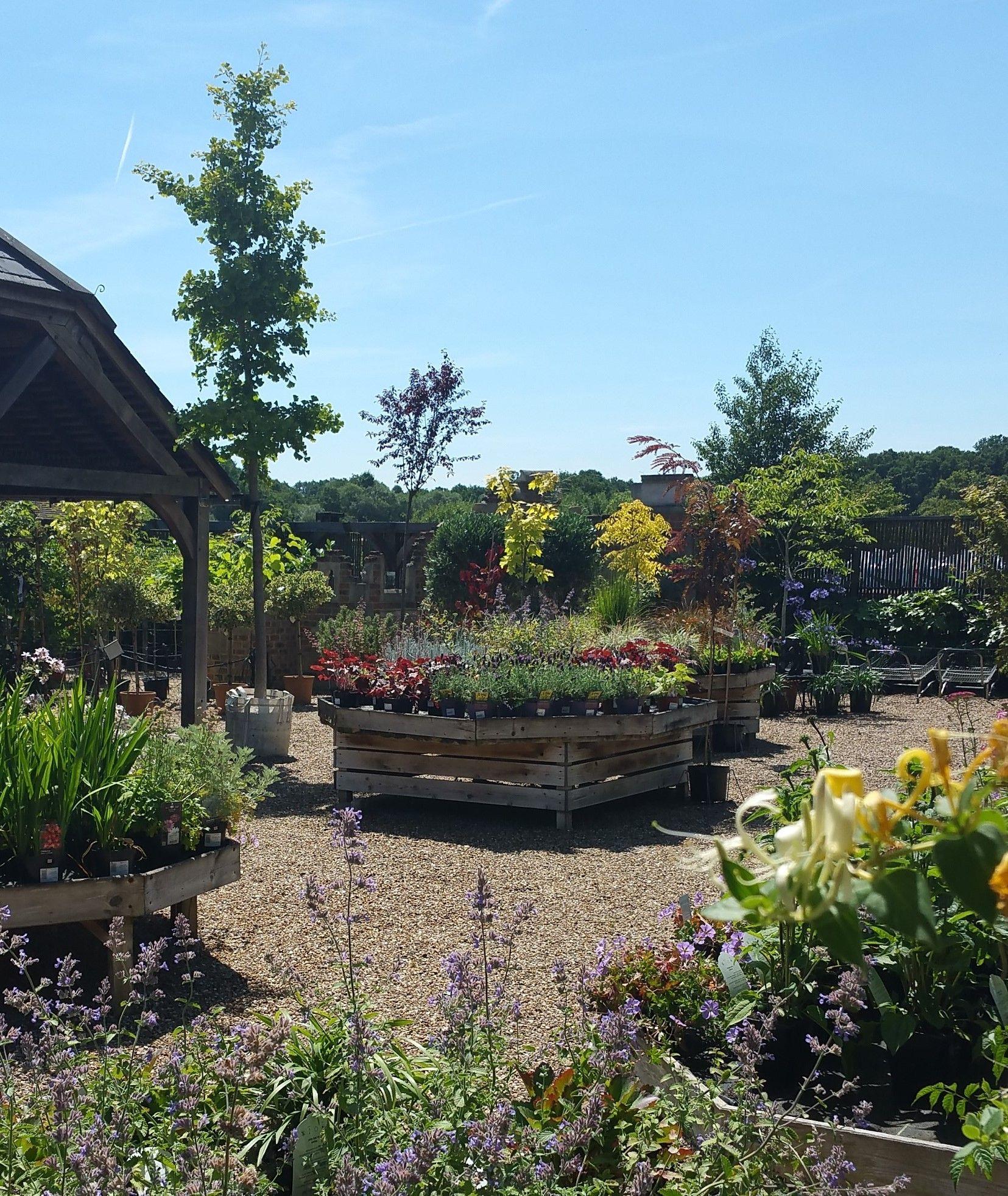 Seasonal planting displays at Cedar Nursery, Cobham