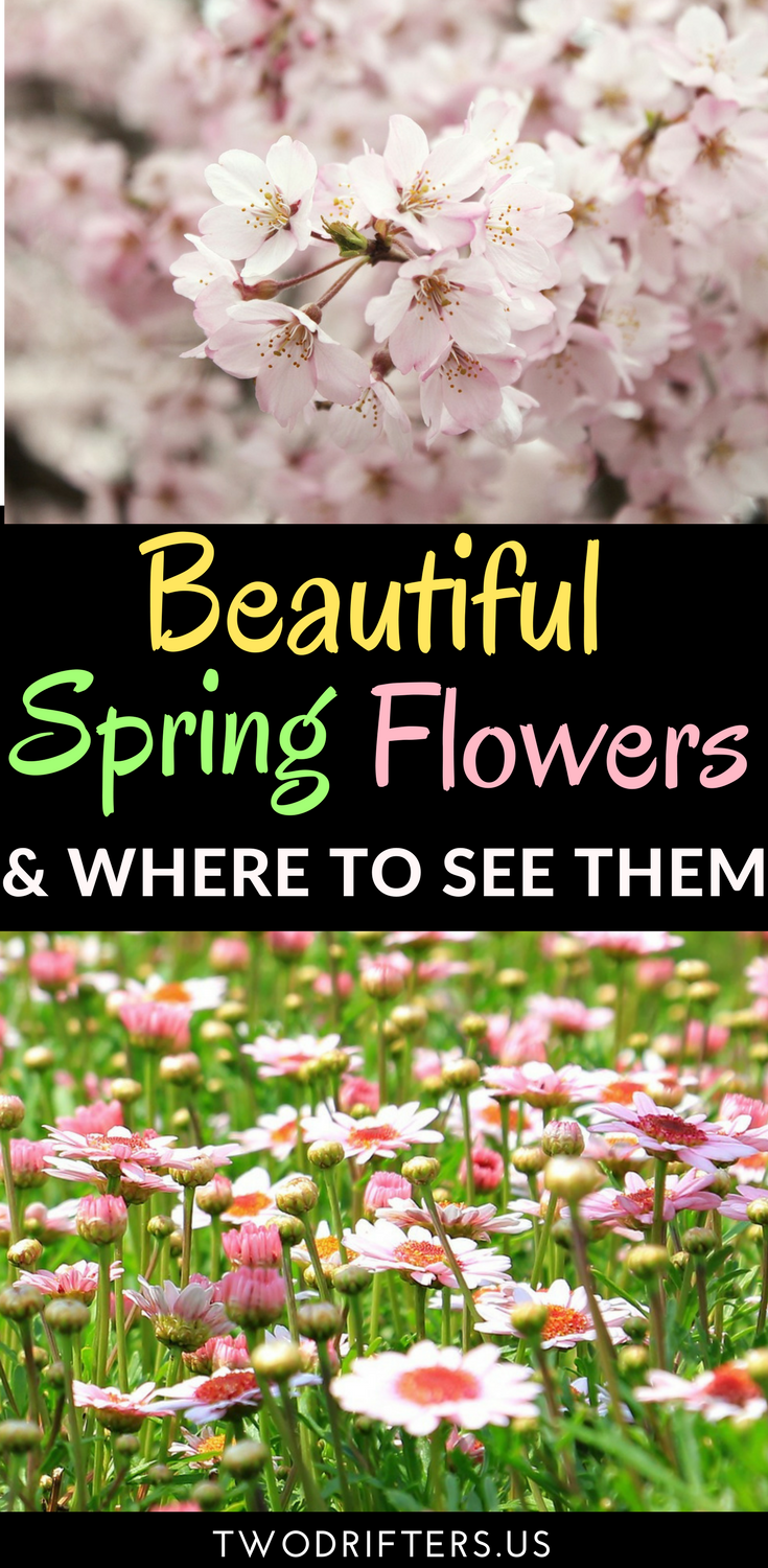 The Best Places To See Flowers In Spring Best Of Two Drifters