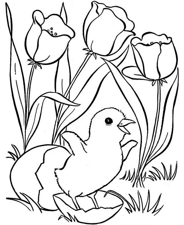 Pin On Spring Coloring Page