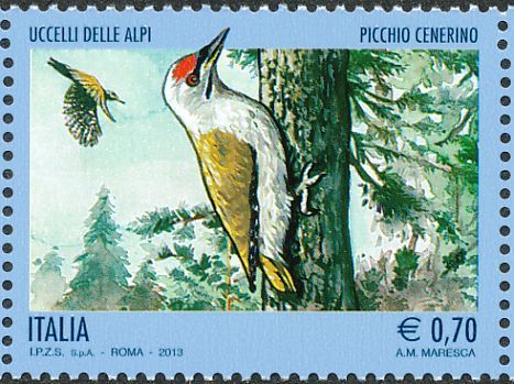 Grey-headed Woodpecker stamps - mainly images - gallery format